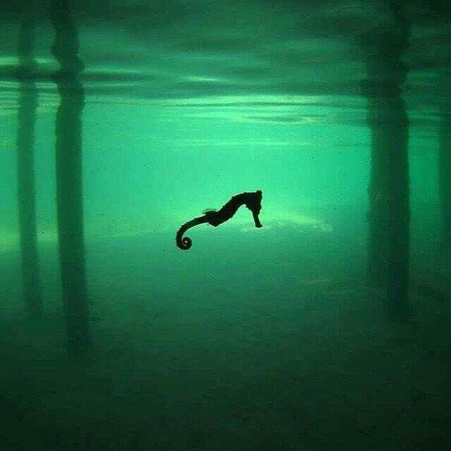 Gran foto de un caballito de mar.