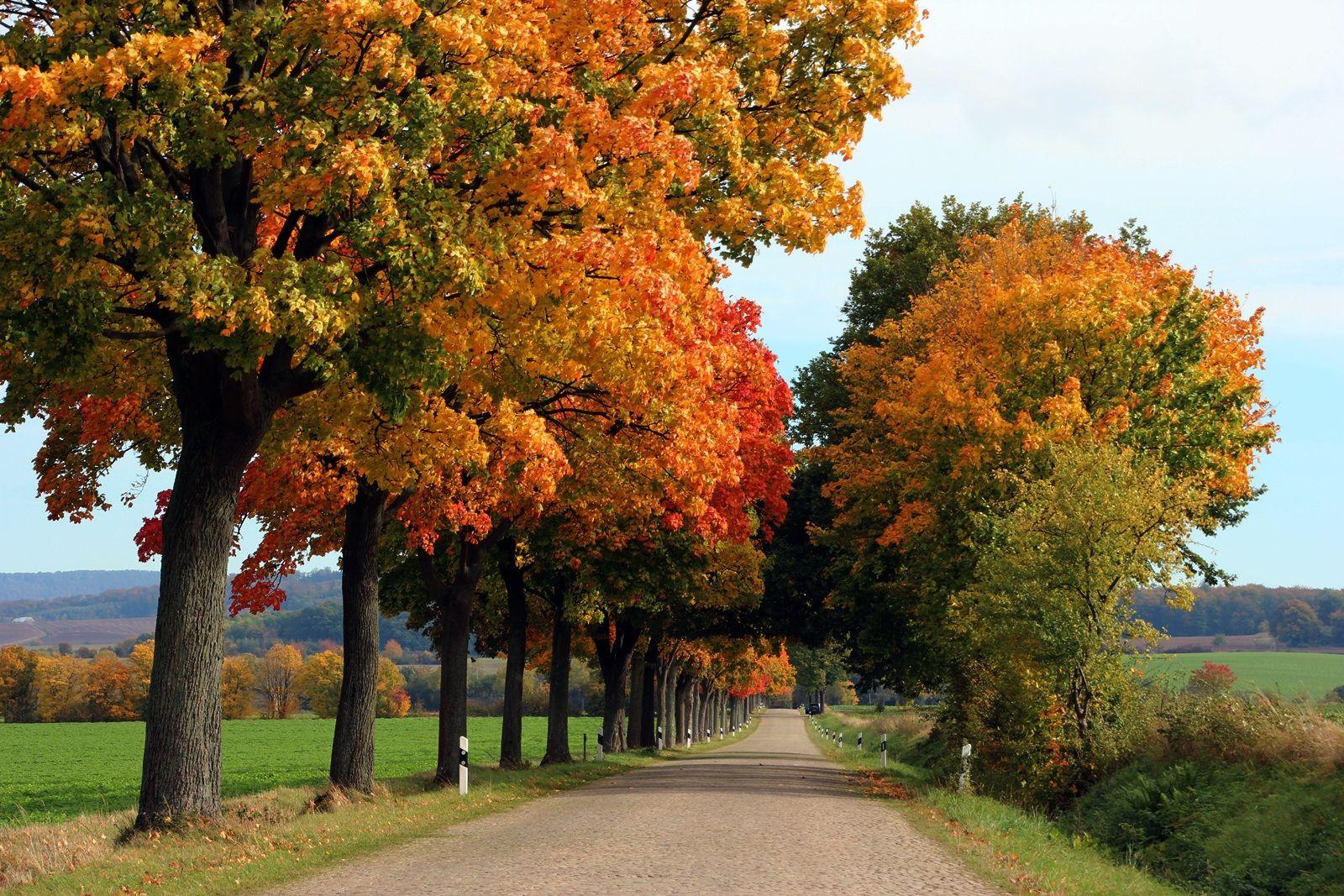 16.10.2012 In der Gemeinde Emmerthal zeigt sich der Herbst von seiner schönsten Seite. Rolf Sander aus Grohnde hat dieses herrlich bunte Farbenspiel mit seiner Kamera festgehalten.