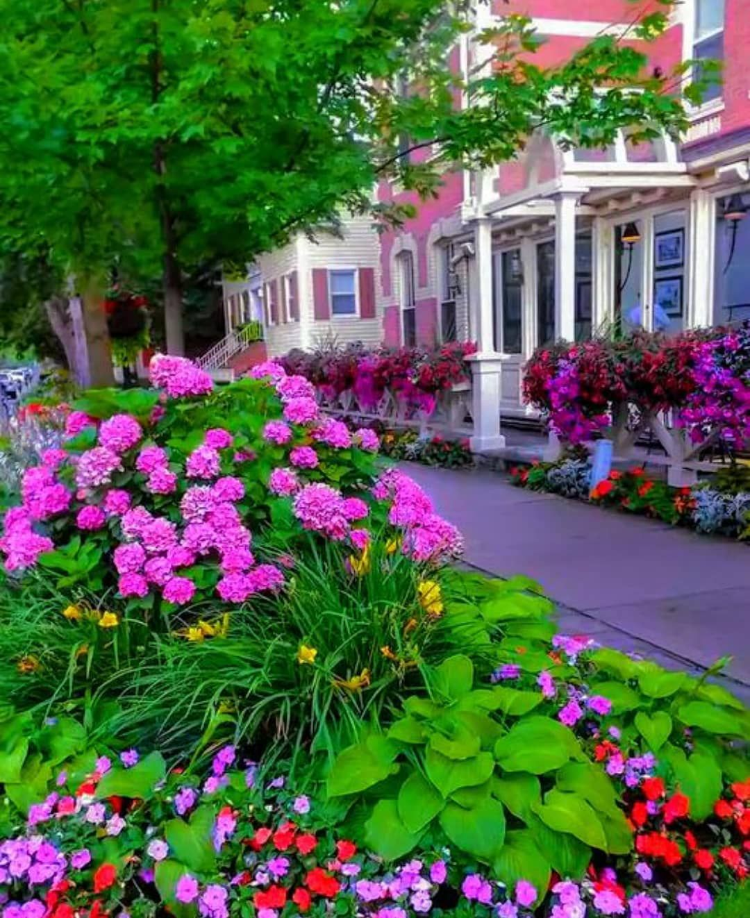 Image May Contain Flower Plant Outdoor And Nature Beautiful Gardens Garden Niagara On The Lake