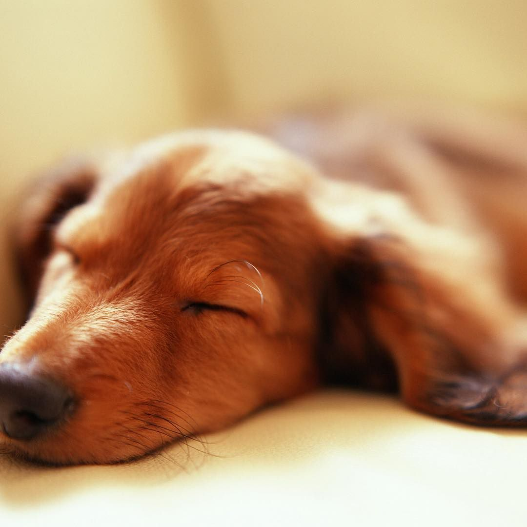 happyday How Long Do Dogs Sleep Per Day? The average