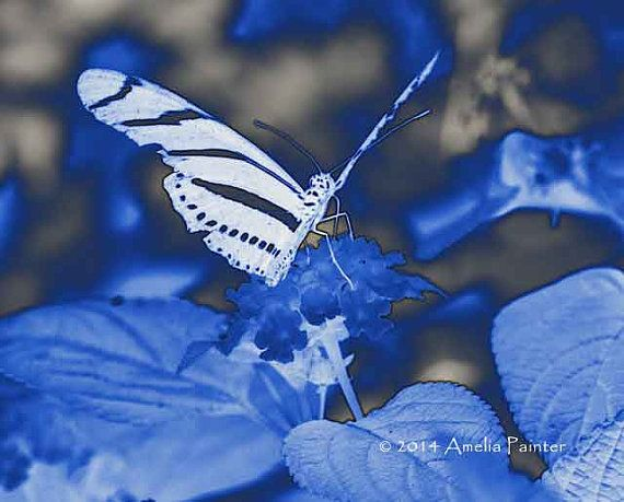Wounded Butterfly in Blue -- Manipulated Digital Art by AmeliaPainter on Etsy, $9.00