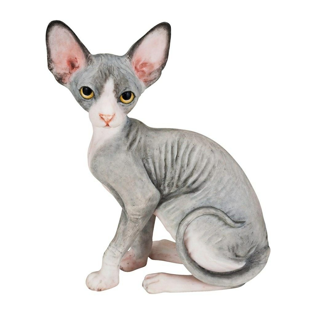 Pin By Penelope On Sphynx Cats Sphynx Cat Hairless Cat Cats