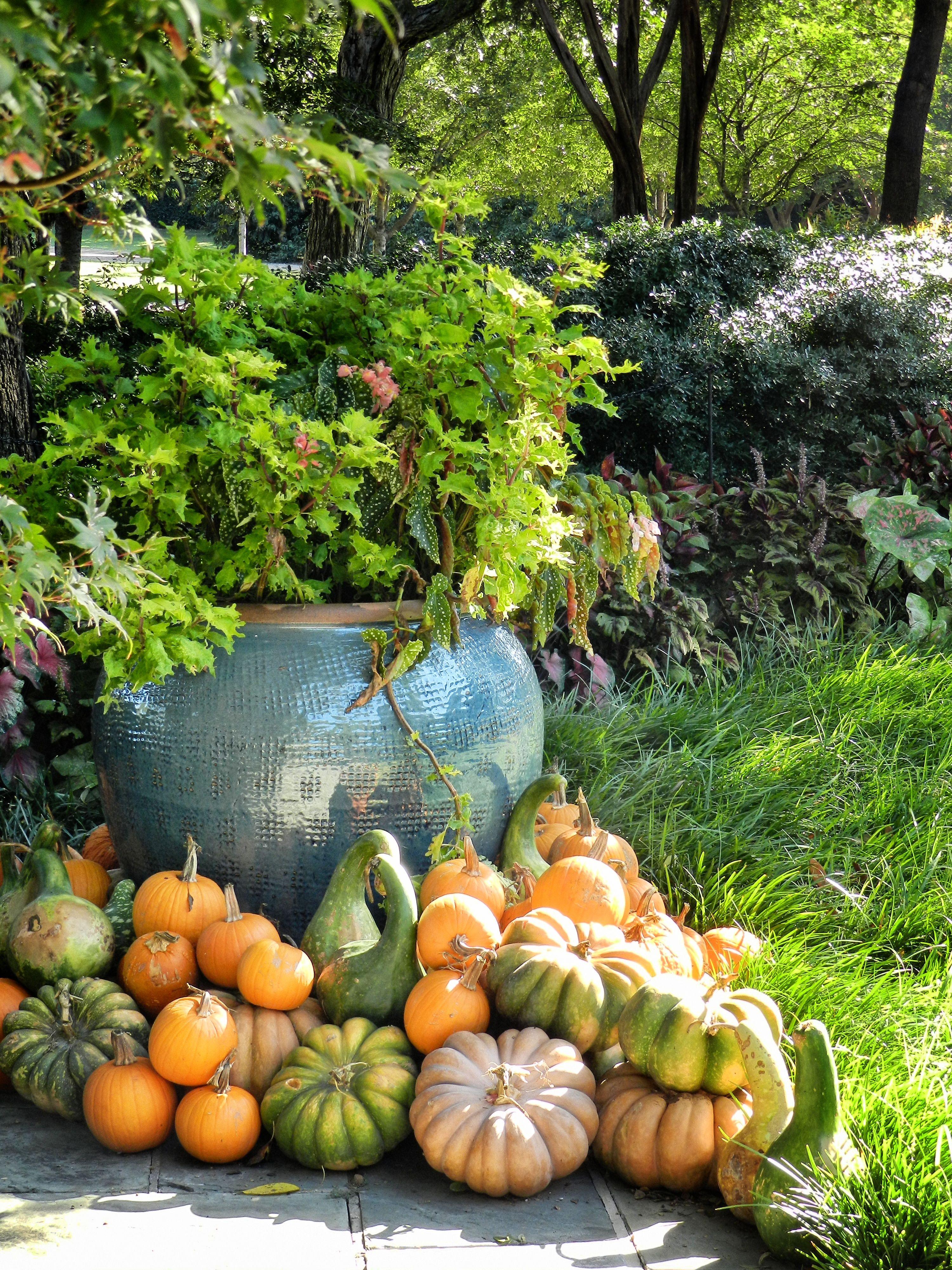 Autumn at The Arboretum, Garden, Flowers, Gourds, Pumpkins
