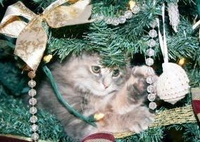 How to Keep Cats Out of the Christmas Tree | Christmas ...