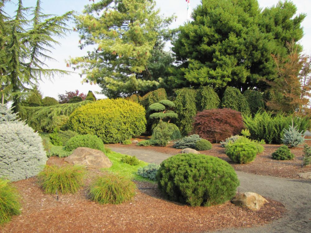 evergreen landscaping (With images) Front yard