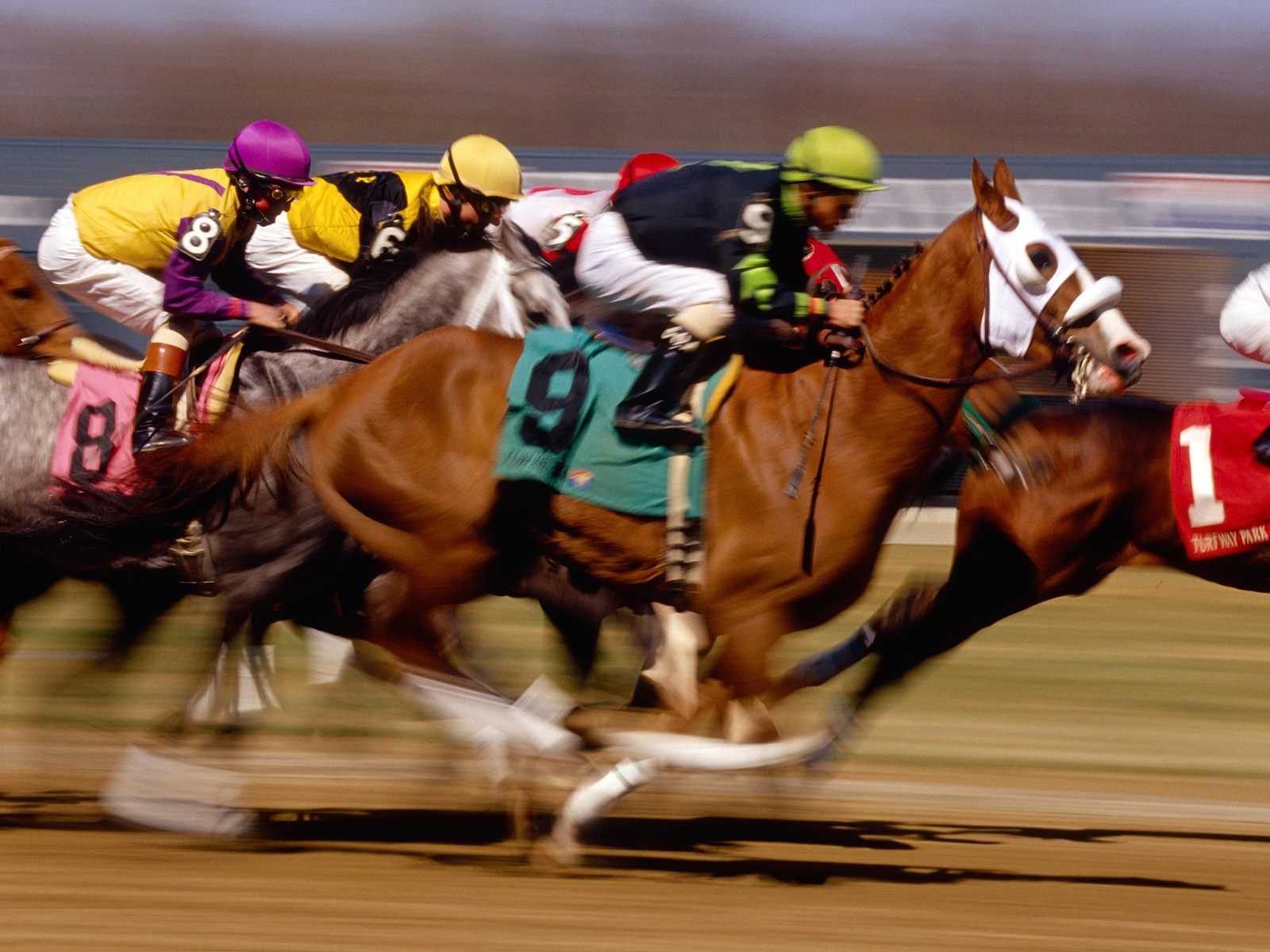 How to Bet on Horse Races A Beginner's Guide Horse