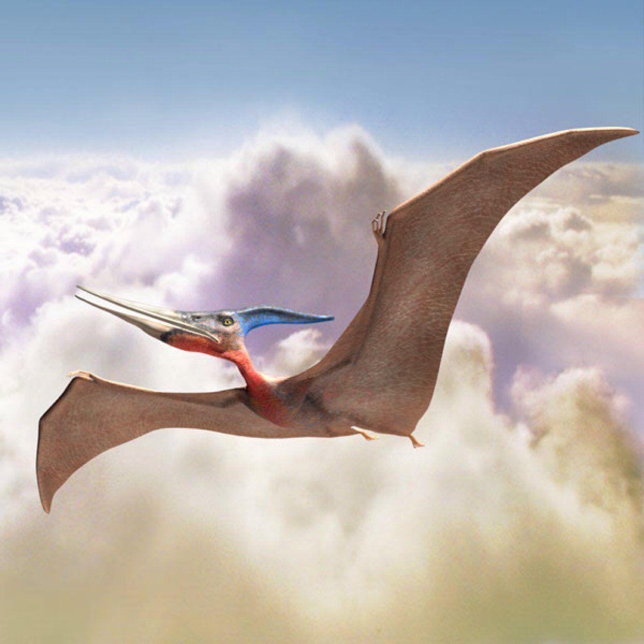 Летающие динозавры картинки для детей