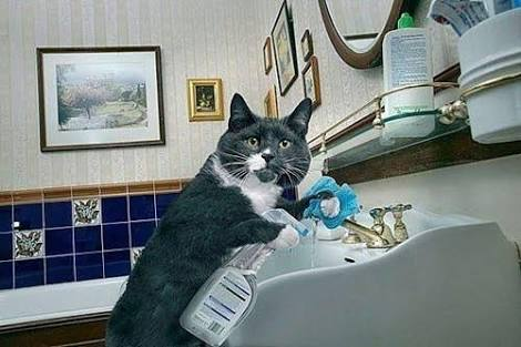 Googled Cat Doing Housework Did Not Disappoint Cat Work Cats Cat Memes