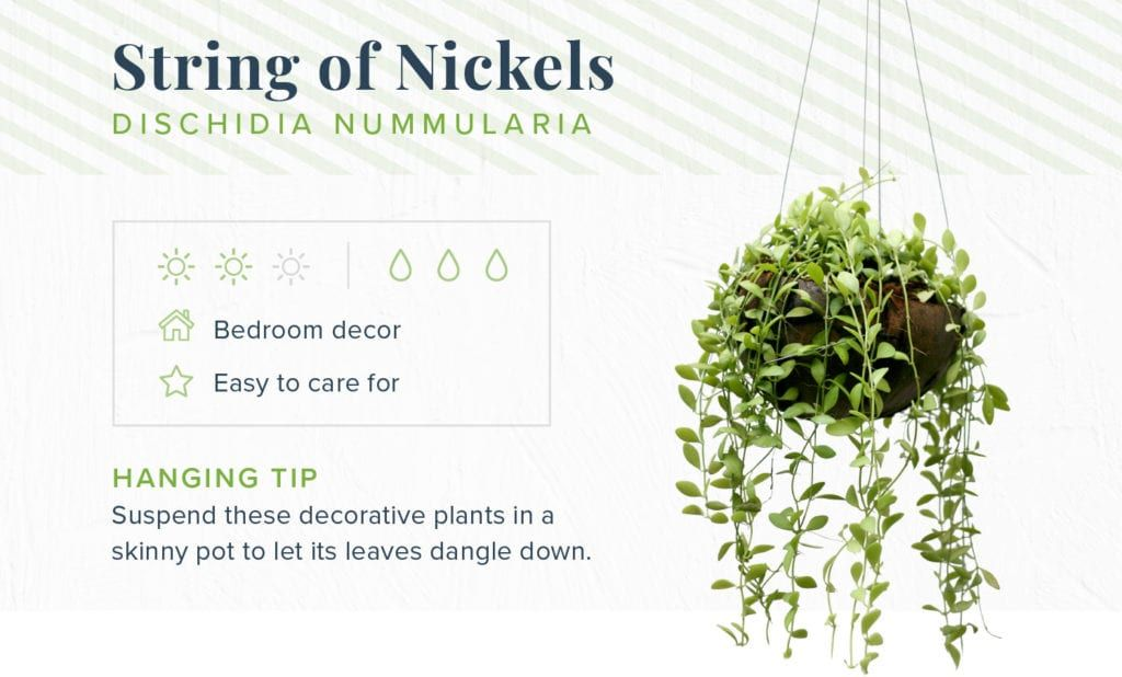 16 Indoor Hanging Plants To Decorate Your Home Proflowers Hanging Plants Indoor Plant Decor Indoor Hanging Plants