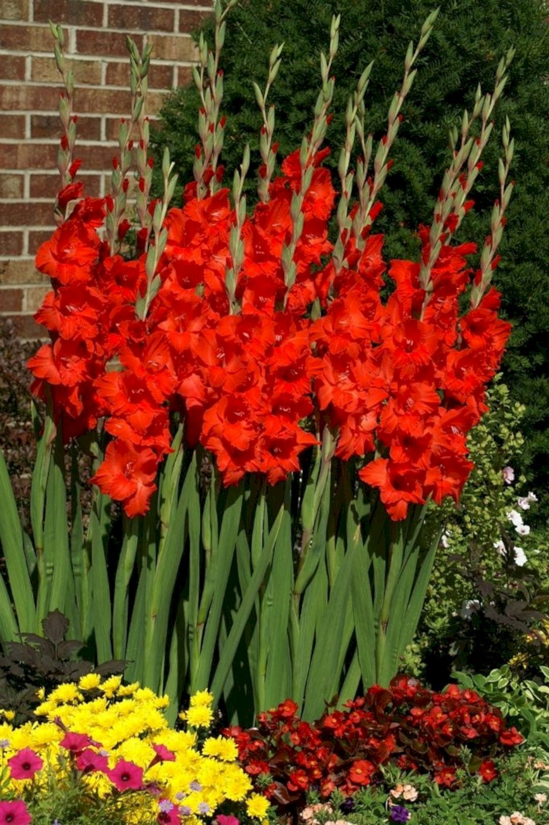 Beautiful 5 Gladiolus Flower Ideas For Your Garden Gladiolus Flower Gladiolus Beautiful Flowers Garden