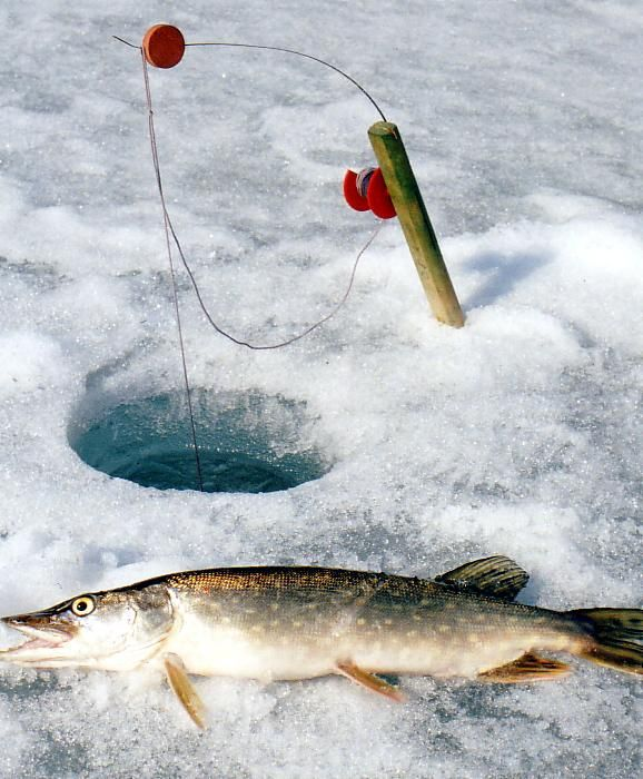 how to make ice-fishing tip-ups. with these ice-fishing tip-ups, Reel Combo