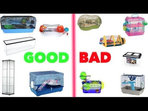 Good Bad Hamster Cages Youtube Hamster Cages Hamster Care