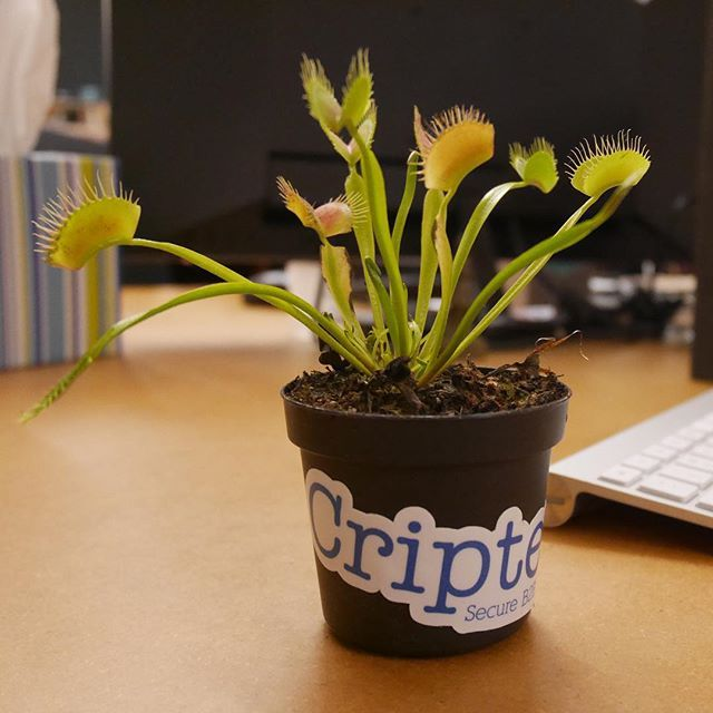 office pet ideas. Closeup Of Our Office Pet, Edward Snowden, The Venus Fly Trap 🌿 Pet Ideas P