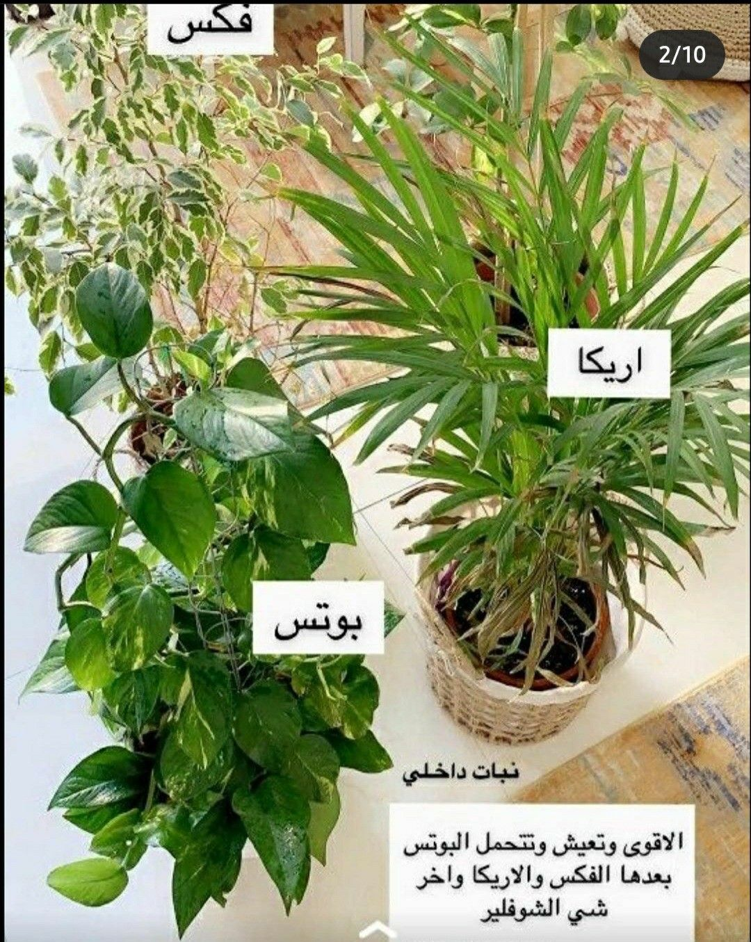 Pin By Sara On نباتاتي الداخلية Indoor Plants Vegetable Garden Planning Indoor Plants Planting Roses