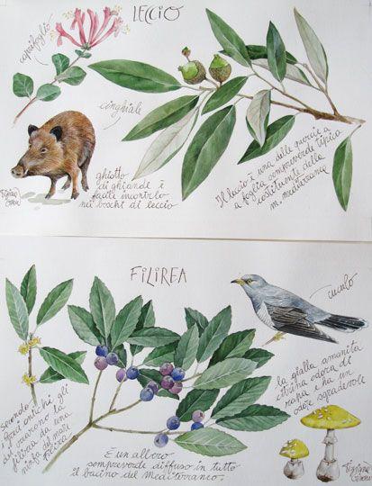 Tiziana Gironi Illustratrice