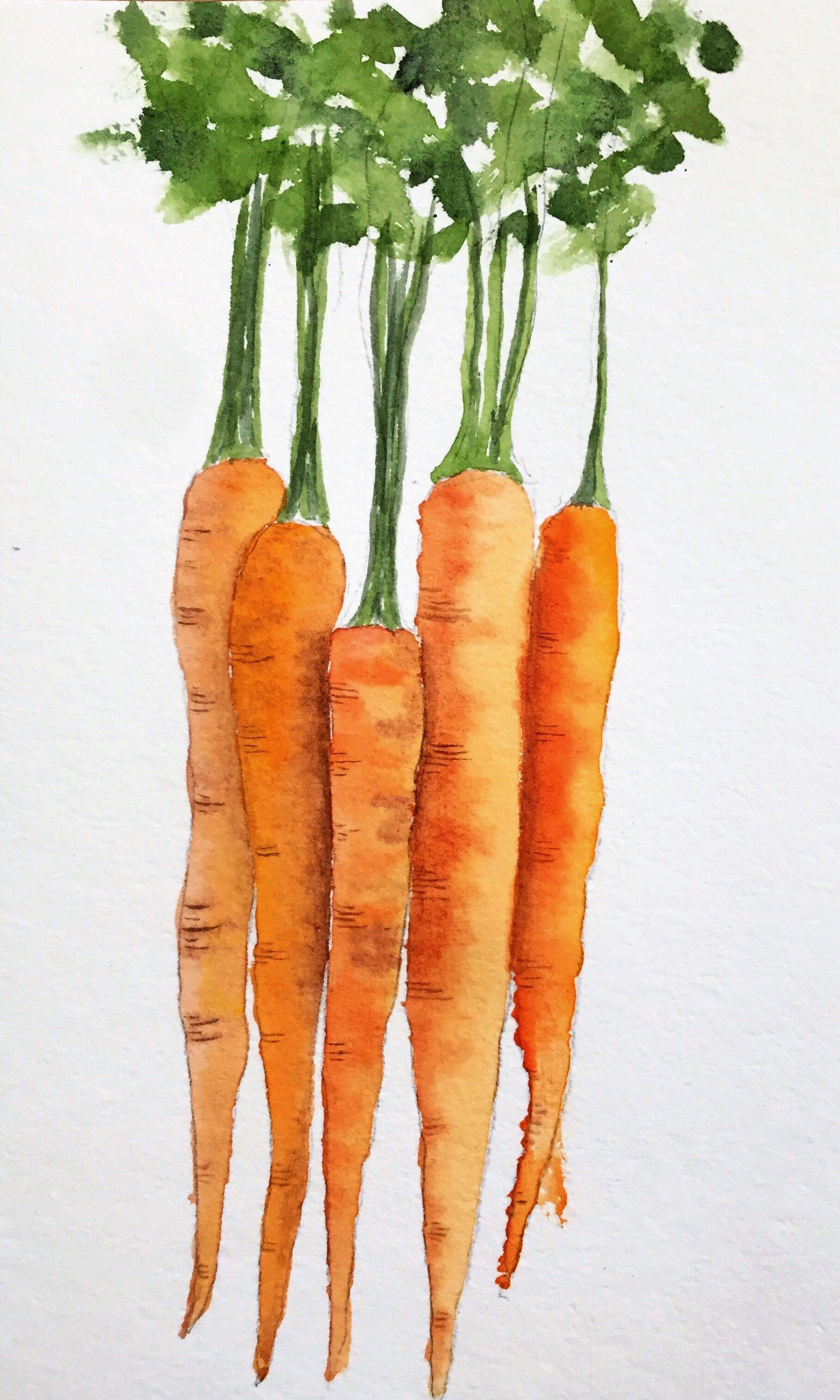 Rainbow Carrots Watercolor Vegetable Painting Rainbow Carrots