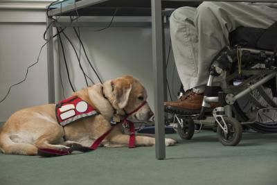How To Certify Service Dogs Ehow Service Dogs Dogs Military Working Dogs