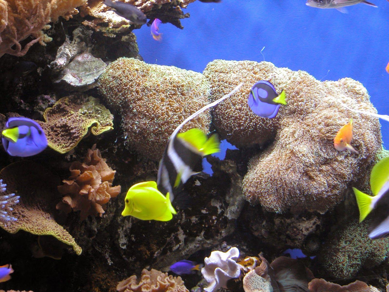 Best Images Of Under Water World Saltwater Aquarium Fish Tropical Fish Marine Fish Tanks