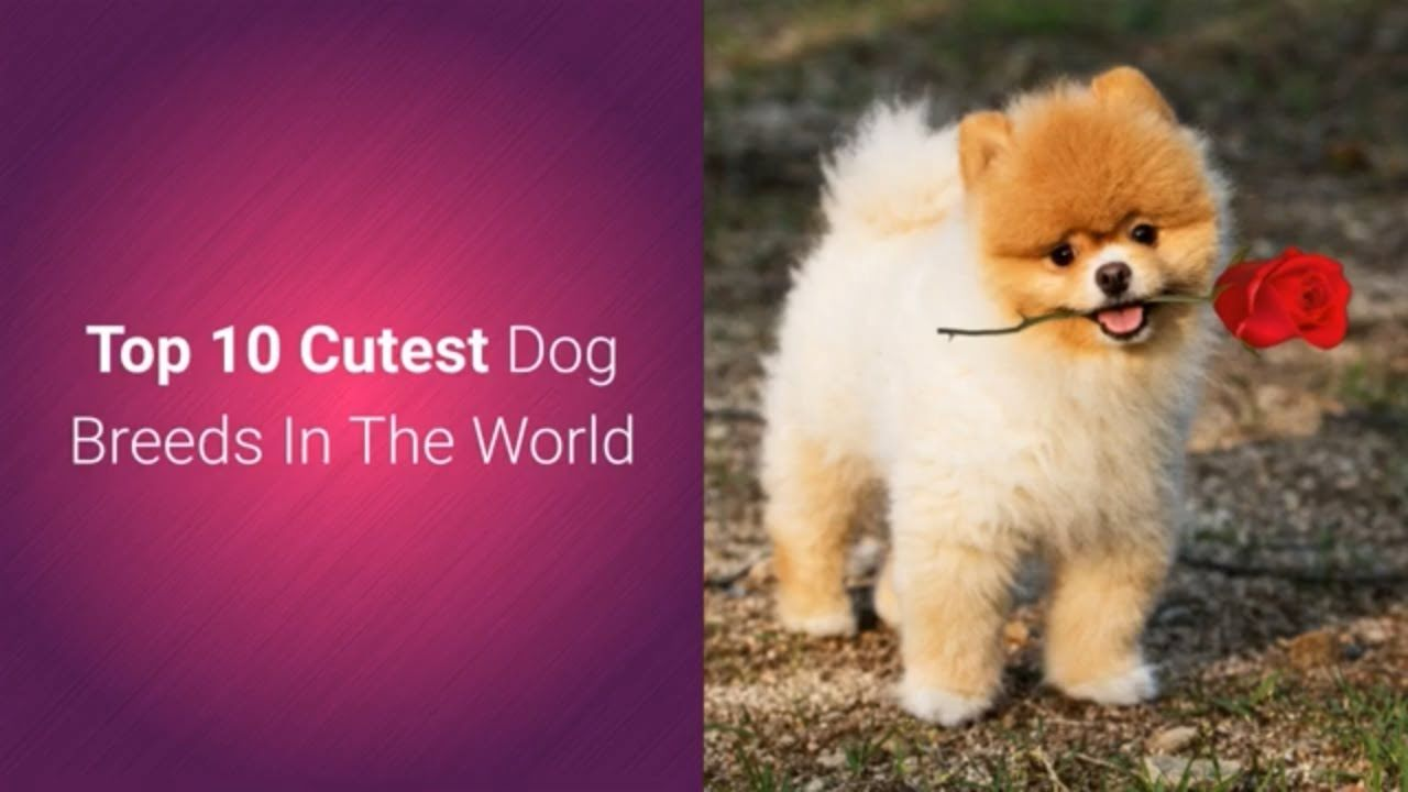 List Of Top 10 Most Cutest Dog Breeds In The World 2019
