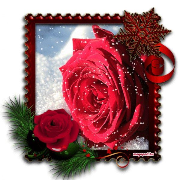 Red rose flower bouquet (animated gif) - Piros rózsacsokor (animált ...