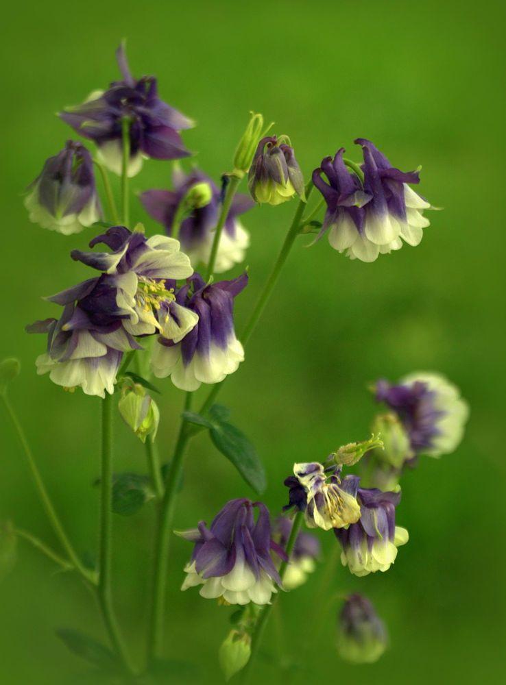 Wunderschöne Blumen, Pflanzen, Exotische Blumen, Lila Blumen, Liebe Blumen,  Schöne Blumen