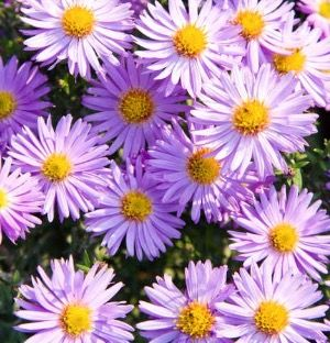 Pin By Kathy Thornton On Smell The Roses Flowers Purple Flower Names Types Of Purple Flowers Flower Names