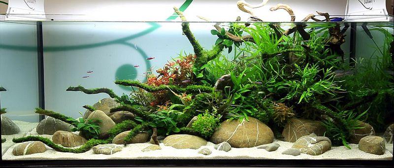 Lets See Your River Rock Scapes The Planted Tank Forum Aquascape Aquarium Sand Aquascape Aquarium