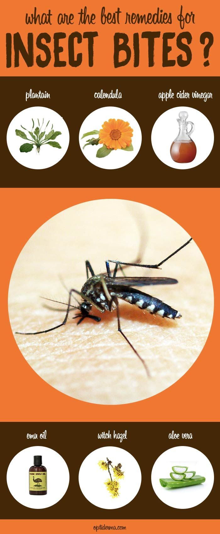 What are the Best Remedies for Insect Bites? Learn about