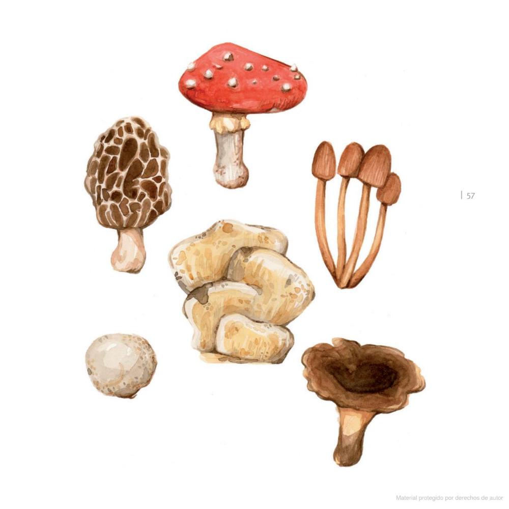 Ecopreguntas Para Niños Curiosos Luz Valeria Oppliger Francisco Bozinovic Google Libros Geek Stuff Stuffed Mushrooms Books