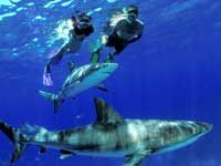 Naussau Bahamas Snorkeling With Sharks The Ultimate Experience