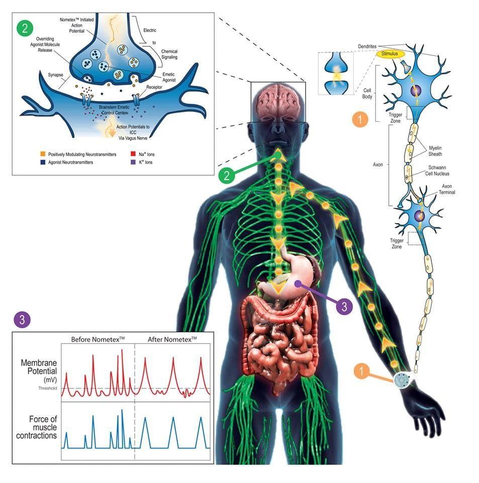Physiology Of Vomiting Brain Medical Physiology Neurology
