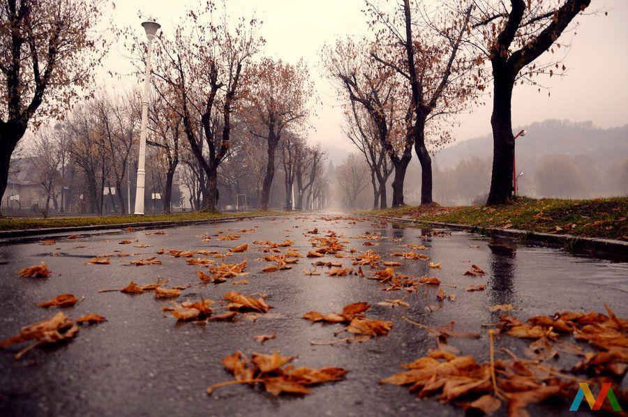 Atmospheric Foggy Autumn Day Autumn Magic Autumn Rain Fall Wallpaper