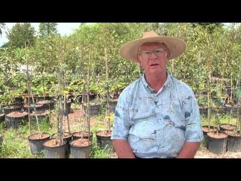 How To Grow Rasberries By Richard Skinner Hawkins Corner Nursery 1 813