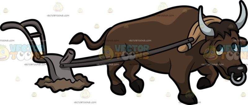 A Carabao Plowing The Field A Dark Brown Carabao With Gray