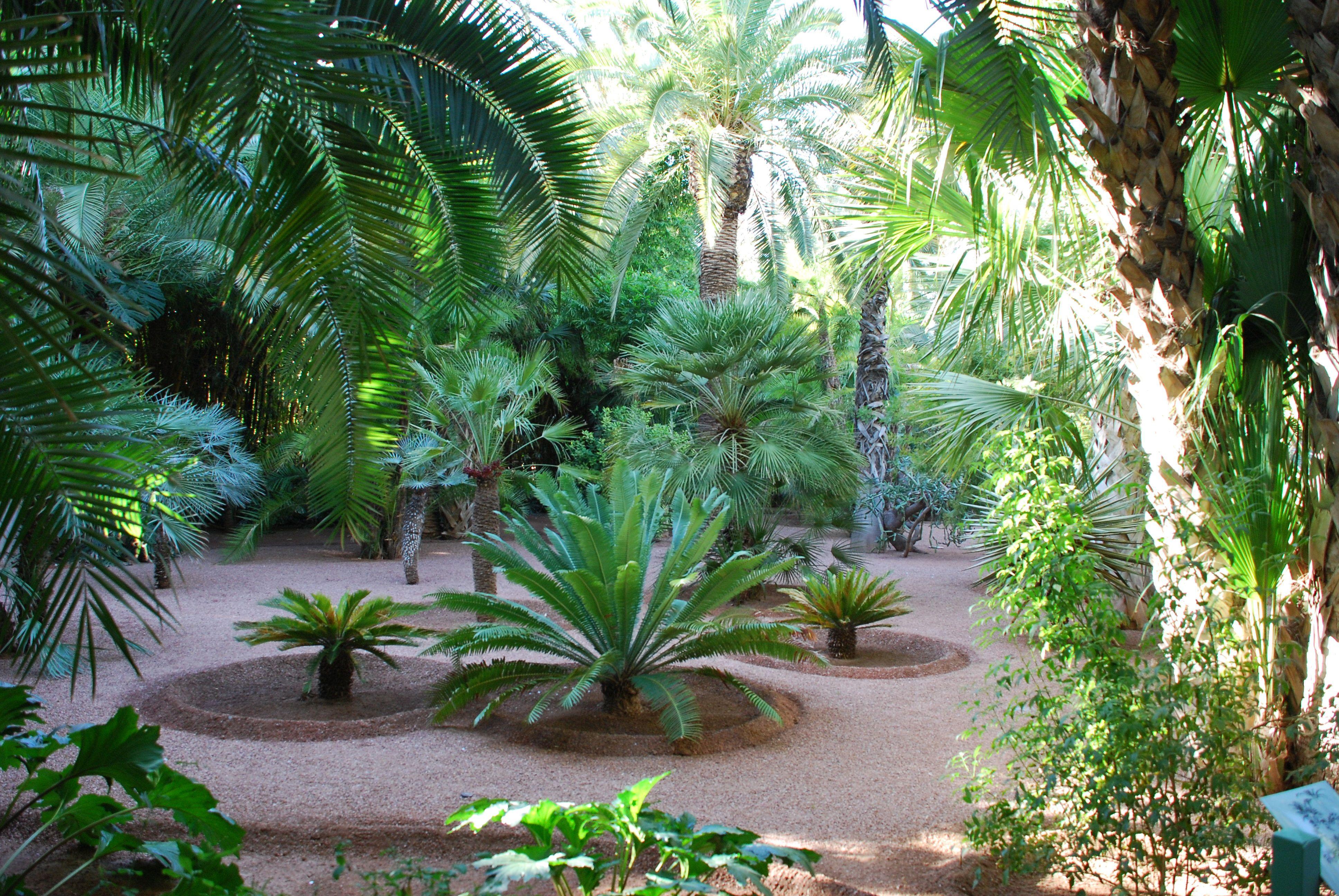 Jardin Majorelle Marrakech Maroko Tropischer Garten Tropisch Garten
