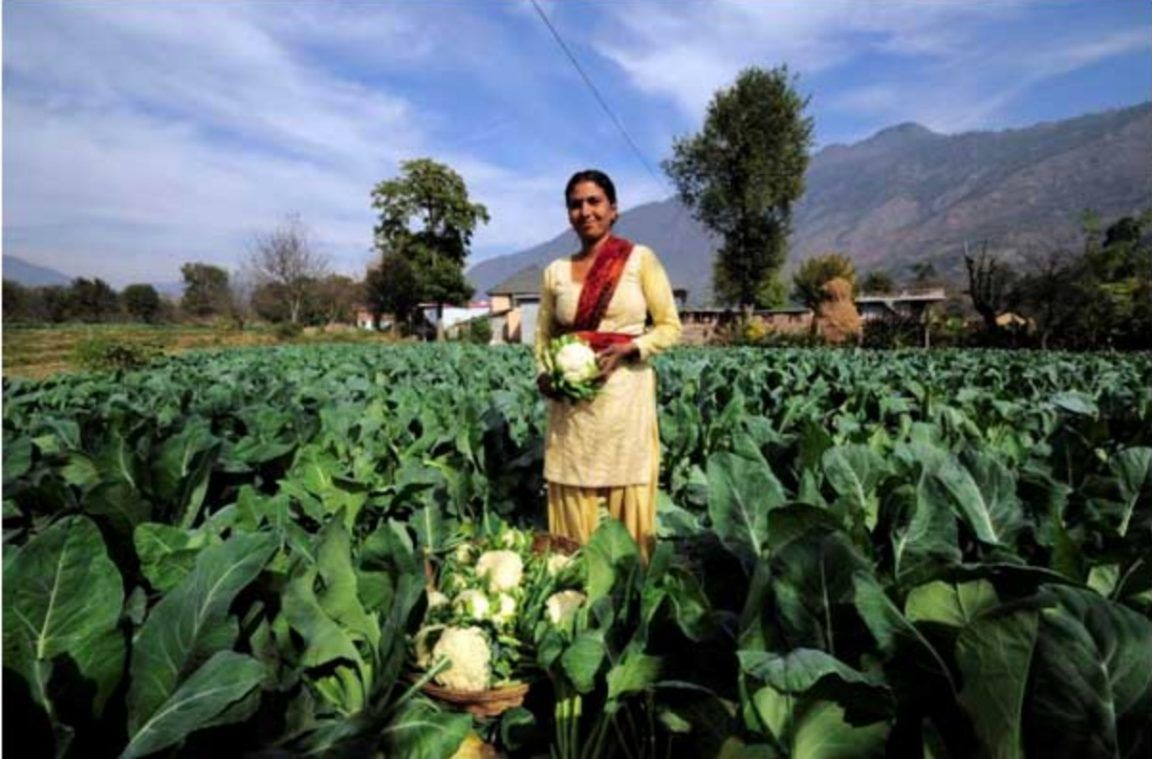 Indian State of Goa to Pay Farmers to Go 100 Organic