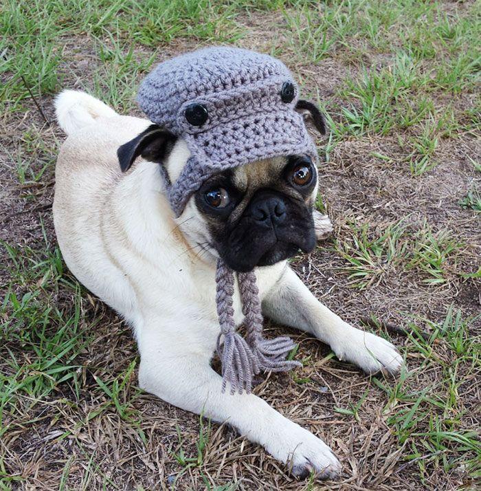 20 geniales gorros tejidos para perros y gatos