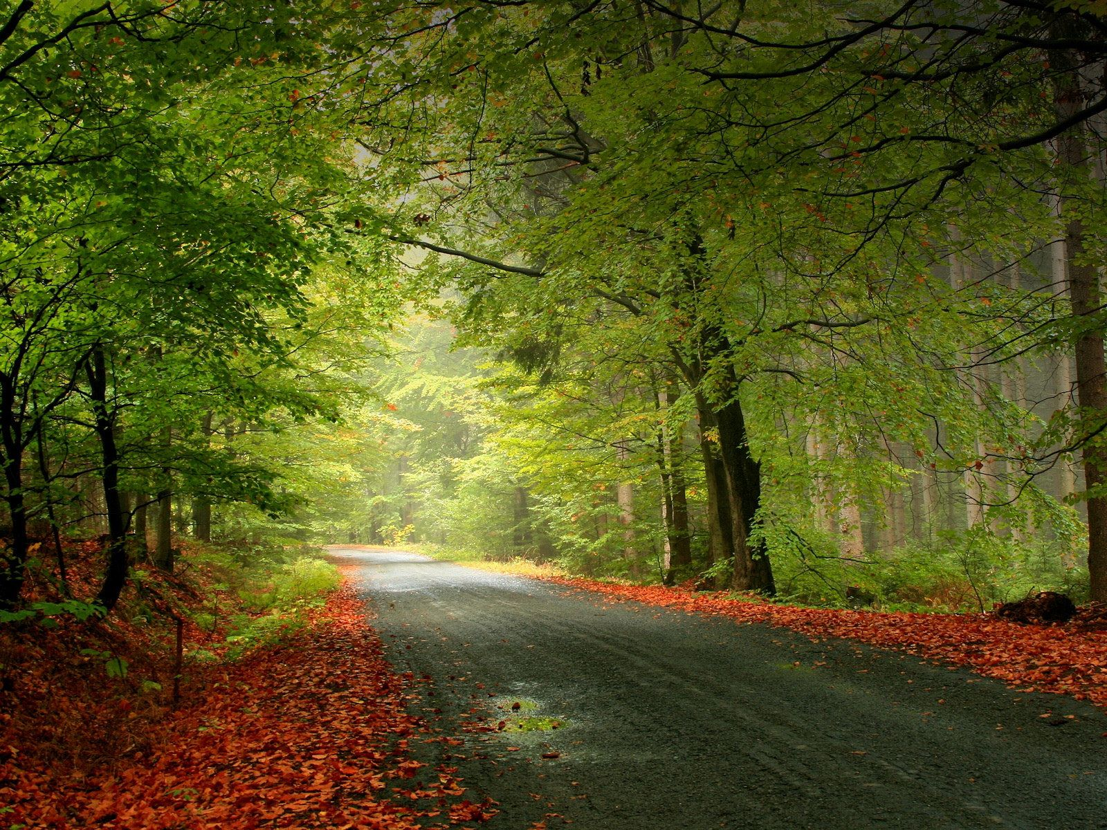 3d Nature Wallpapers Beautiful Roads Nature Wallpaper Forest Road