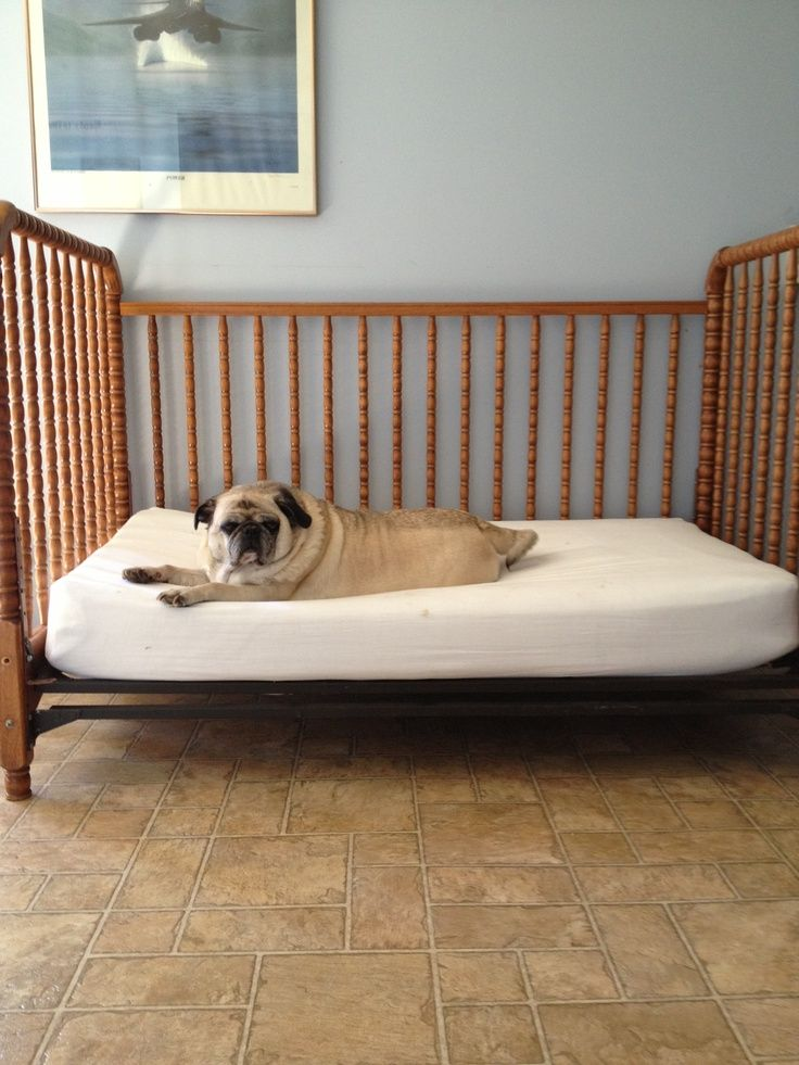 Old Baby Crib Dog Bed Turned Old Crib Into A Bed For One
