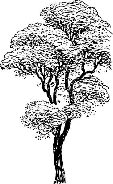 Free Tall Tree Clipart Black And White Clipartfox Tree Silhouette Tree Sketches Tree Coloring Page
