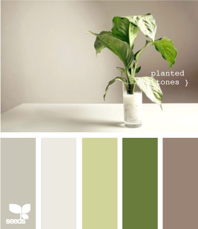 Grey And Green Serene Peaceful Design Seeds Plant Tone Colour Schemes