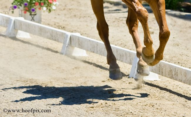 Get your horse into gear! - Dressage & hind end alignement