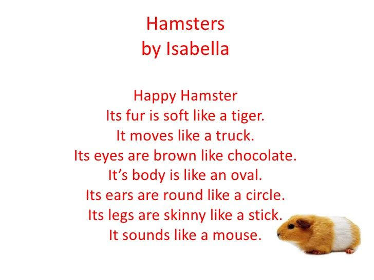 Hamsters By Isabella Happy Hamster Its Fur Is Soft Like A