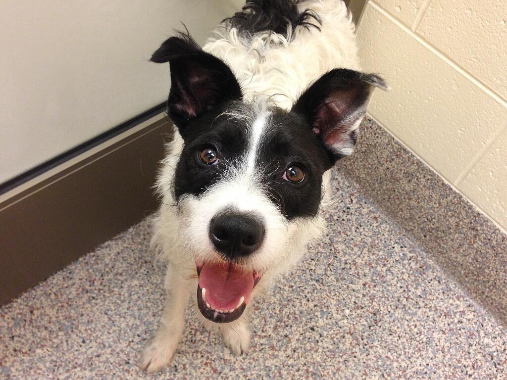 John Clark Dogs up for adoption, Humane society, Animals