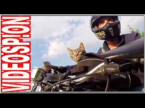 I MIGLIORI VIDEO VIDEOSP!ON50 interessanti✔scherzi✔spaventosi✔spettacola...