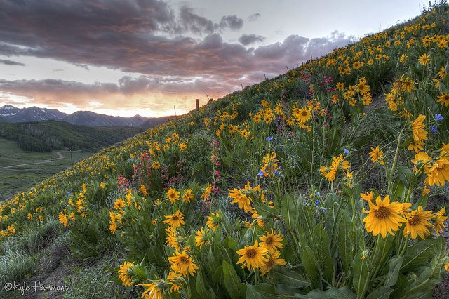 Wild Flower Capital of COLORado. Or is it, ColoRADo? Either way, Crested Butte is the best!