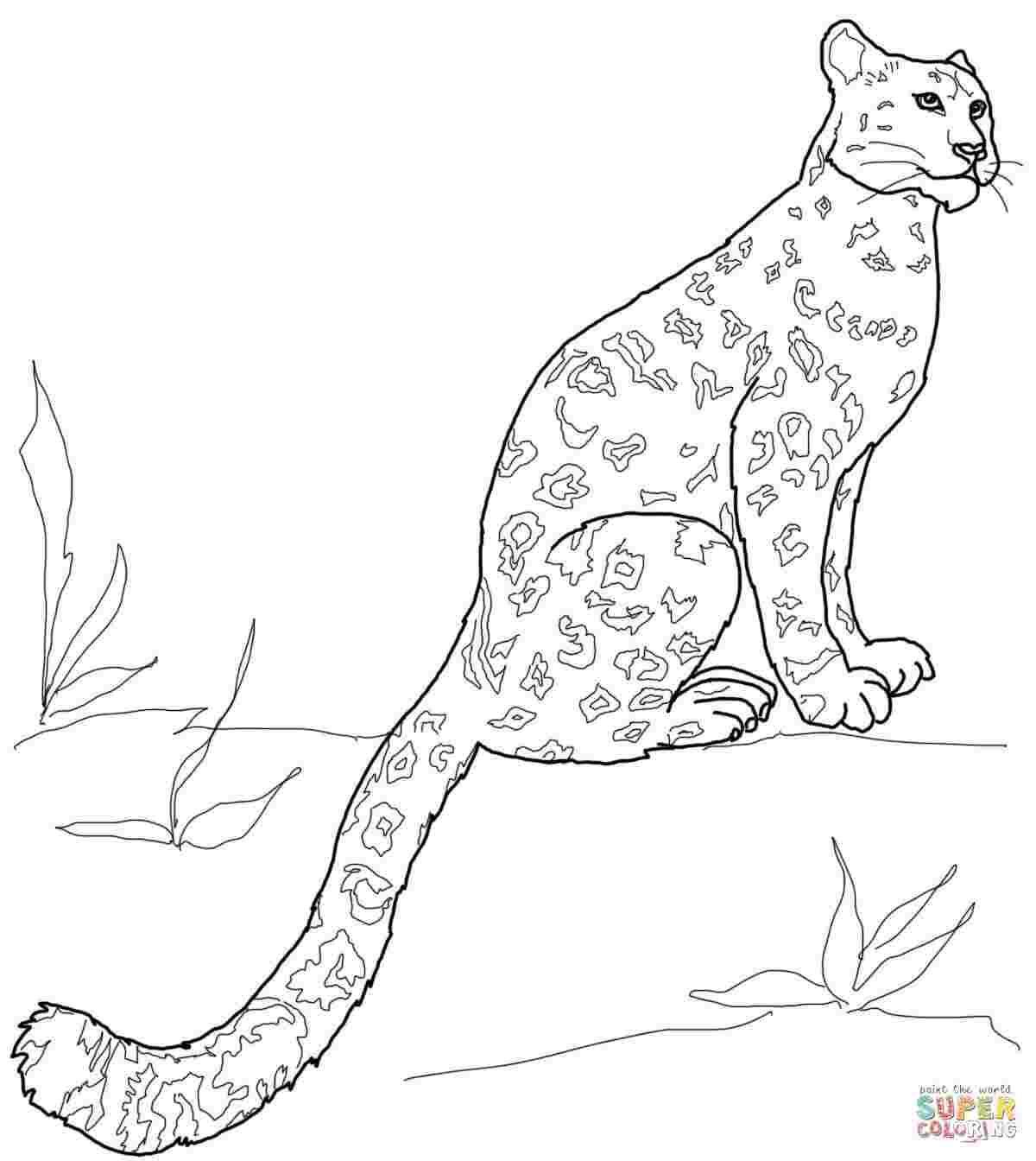 Coloring Pages Snow Leopard Coloringpages Coloringpageschristmas