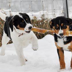 Pin Von Tina G Auf Hunde In 2020 Hunde Hunderassen Hunde Rassen