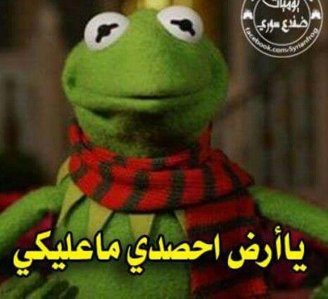 لا تعليق يا ضفدع Funny Arabic Quotes Arabic Funny Funny Comments