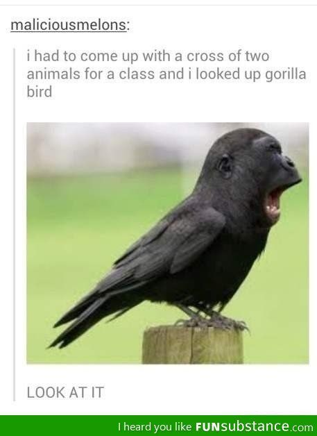 Gorilla Bird. Just... priceless. | Hilarious Things ...